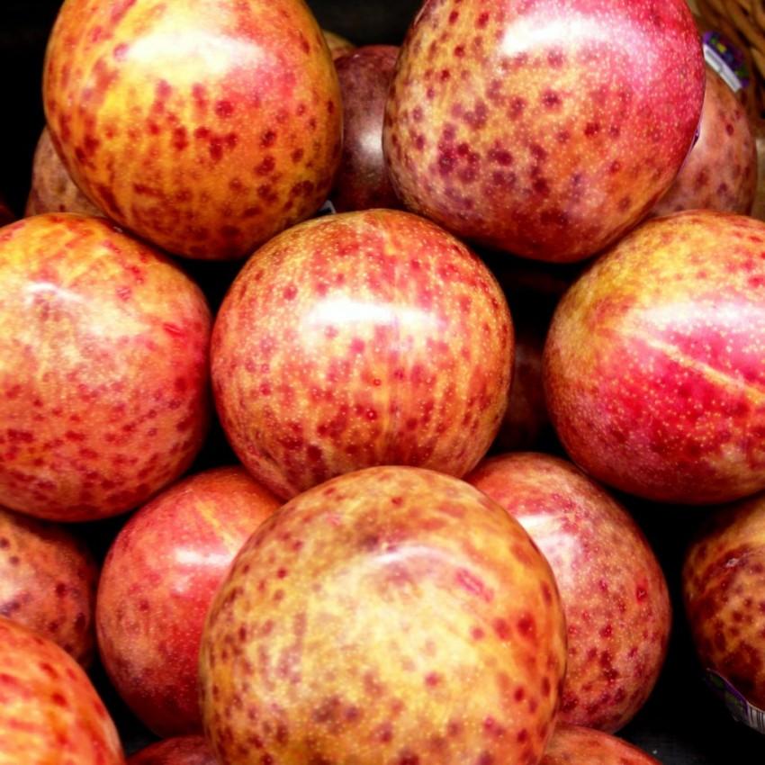 Гибрид сливы и абрикоса название отличие
