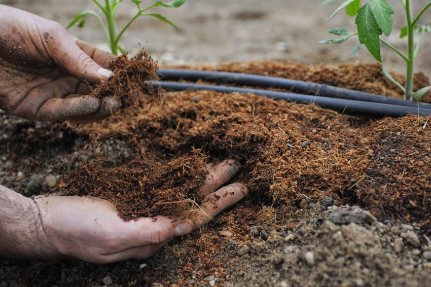 Грунт для рассады томатов: как лучше выбрать землю для выращивания хороших помидоров, какая почва нужна сеянцам для пикировки?