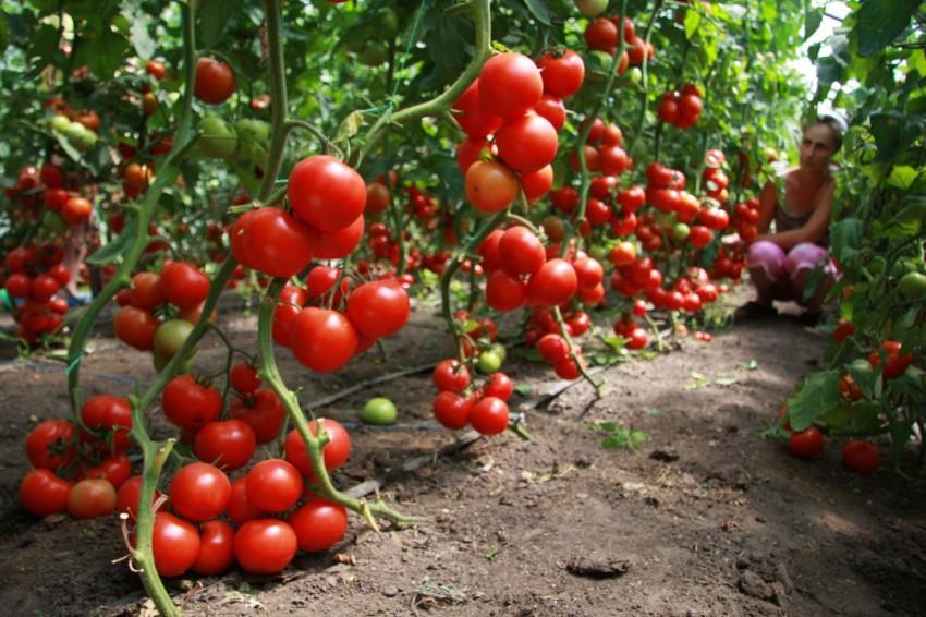Как сделать колышки для помидор своими руками