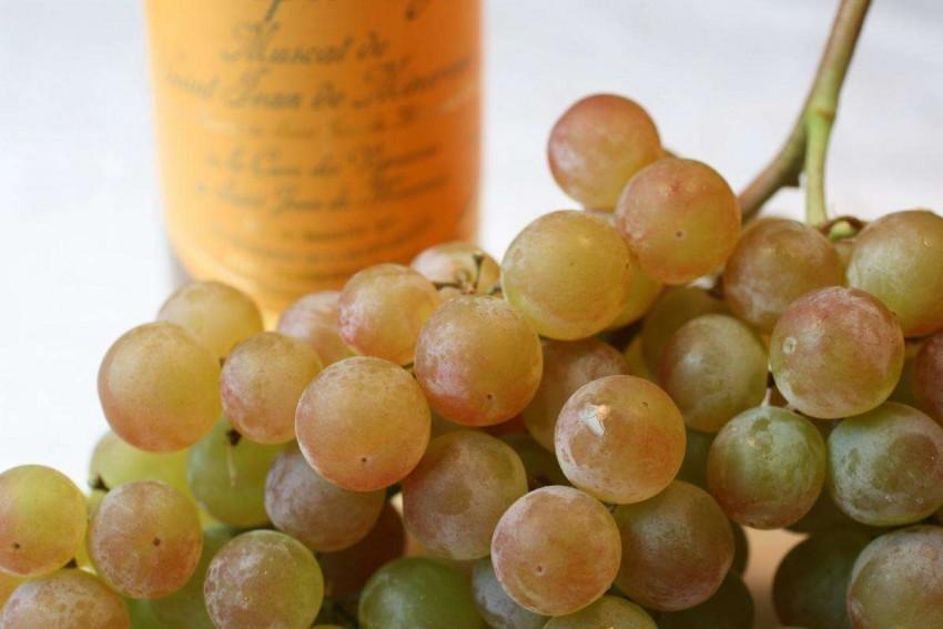 Виноград со вкусом муската