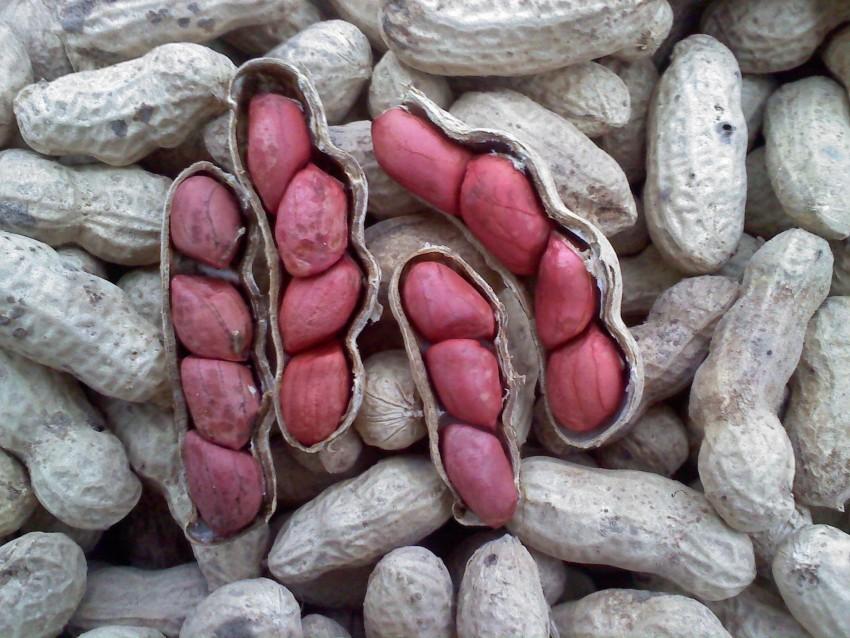 Как выглядит арахис